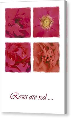 Roses Are Red .... Canvas Print by Hazy Apple