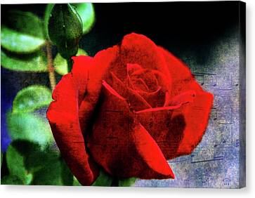 Roses Are Red My Love Canvas Print by Susanne Van Hulst