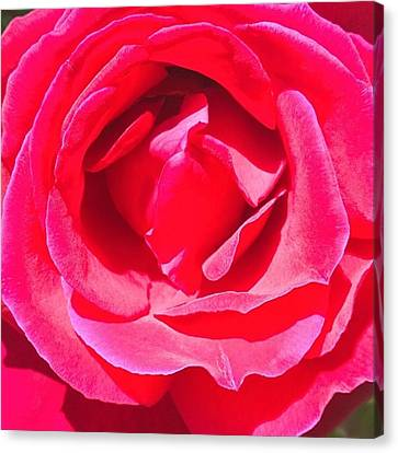 #roses Are #red ...#violets Are #blue Canvas Print