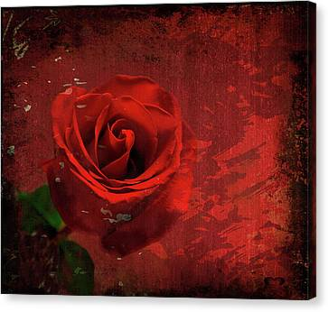 Canvas Print featuring the photograph Roses Are Still Red by Bonnie Willis
