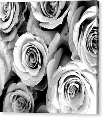 Roses - Black And White Canvas Print by Marianna Mills