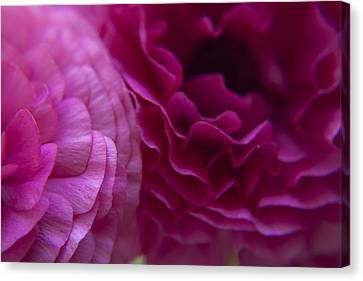 Roses Caressing Canvas Print by M Valeriano