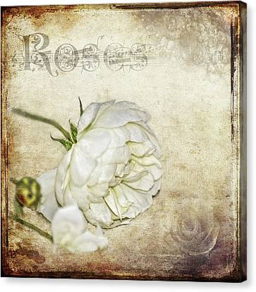 Roses Canvas Print by Carolyn Marshall