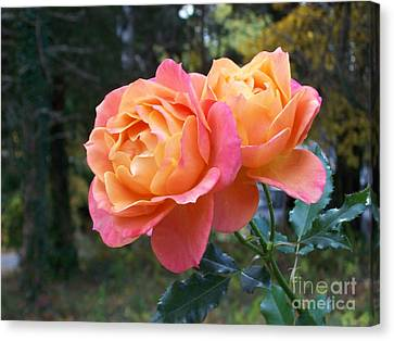 Roses In The Woods Canvas Print by Mary Ann Weger