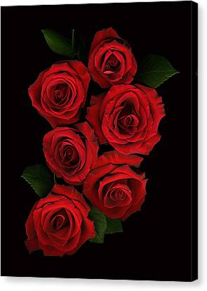 Roses Of Love Canvas Print