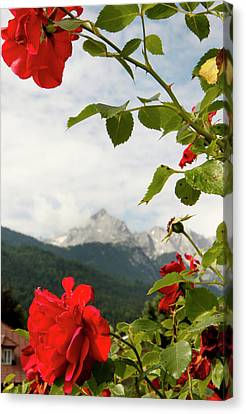 Canvas Print featuring the photograph Roses Of The Zugspitze by KG Thienemann