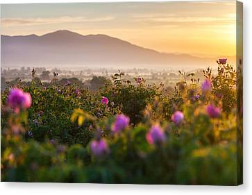 Roses Valley Canvas Print by Evgeni Dinev