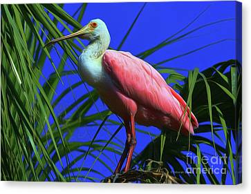 Canvas Print featuring the painting Rosetta Spoonbill Alligator Farm by Deborah Benoit