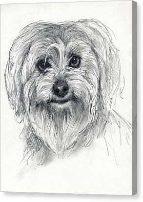 Rosie Canvas Print by Tim Thorpe