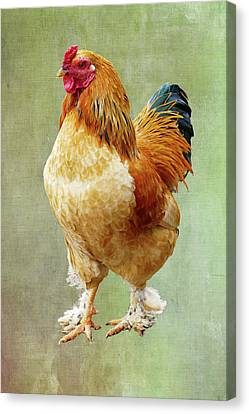 Otis T Rooster Canvas Print by Elijah Knight