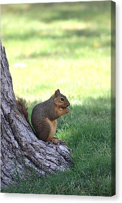 Roswell Squirrel Canvas Print by Colleen Cornelius