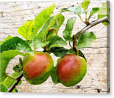 Rosy Hall Canvas Print - Rosy Apples by Susan Tinsley