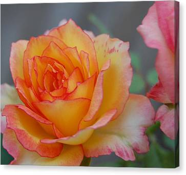 Rosy Outlook Canvas Print by Jean Booth