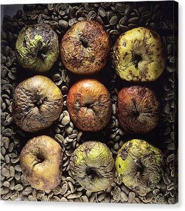 Rotten Apples Canvas Print by Bernard Jaubert