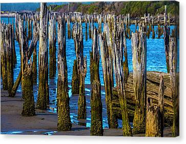 Rottening Pier Posts Canvas Print by Garry Gay