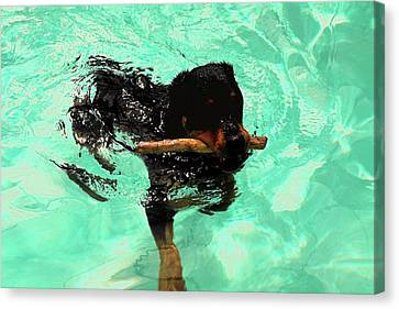 Rottweiler Dog Swimming Canvas Print by Sally Weigand