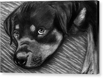 Rotty Canvas Print by Peter Piatt