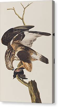 Rough Legged Falcon Canvas Print by John James Audubon