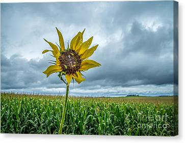 Lisa Phillips Canvas Print - Rough Summer by Lisa Phillips