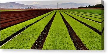 Row Crop Of Hollister Canvas Print by Peggy Leyva Conley