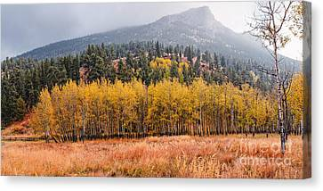 Row Of Aspens In The Fall River Valley - Fall Foliage In Estes Park Colorado Canvas Print by Silvio Ligutti