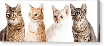 Row Of Cats Closeup Canvas Print by Susan Schmitz