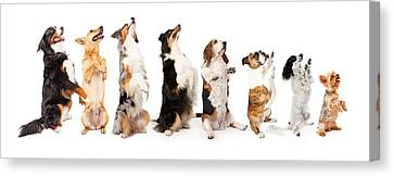 Row Of Dogs Sitting Up To Side Begging Canvas Print by Susan Schmitz