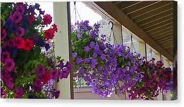 Row Of Flower Baskets Canvas Print by Steve Ohlsen
