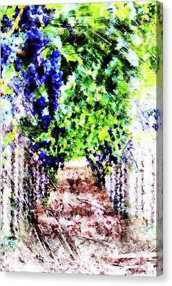 Grape Vine Canvas Print - Row Of Grapes by Andrea Barbieri