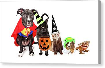 Row Of Household Pets In Halloween Costumes Canvas Print