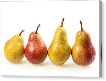 Row Of Pears Canvas Print by Elena Elisseeva