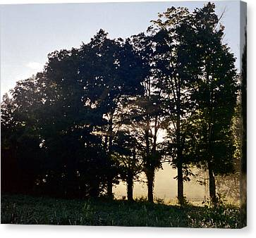 Canvas Print featuring the photograph Row Of Trees by Josean Rivera