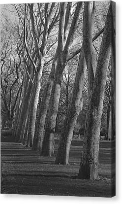 Row Trees Canvas Print by Henri Irizarri