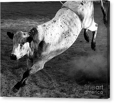 Rowdy Bucking Bull Canvas Print
