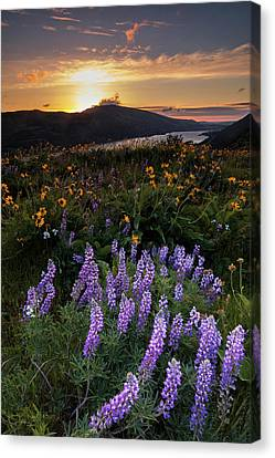 Canvas Print featuring the photograph Rowena  Dawn by Mike Lang