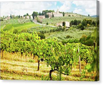 Rows Of Grapes In Tuscany Italy Vineyard Canvas Print by Susan Schmitz
