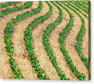 Rows Of Green Canvas Print
