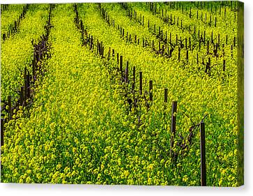 Rows Of Mustard Grass Canvas Print