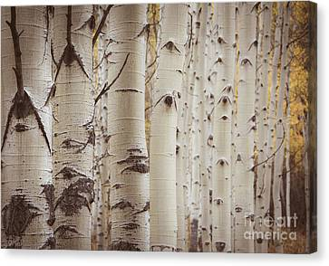 Canvas Print featuring the photograph Rows by The Forests Edge Photography - Diane Sandoval