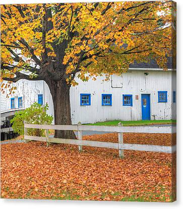 And Canvas Print - Roxbury Connecticut Barn Square by Bill Wakeley