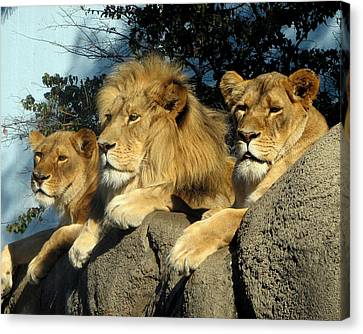 Royal Family Canvas Print by George Jones