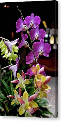 Canvas Print featuring the photograph Royal Hawaiian Orchids by Michele Myers
