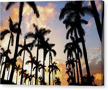 Royal Palm Way Canvas Print