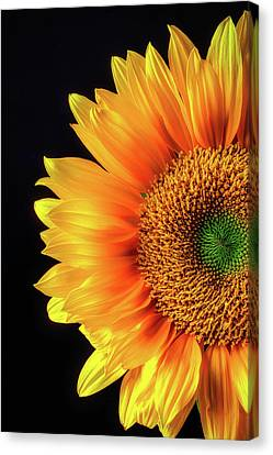 Royal Sunflower Canvas Print