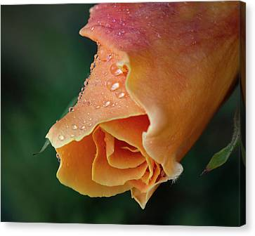 Canvas Print - Royal Sunset by Jean Noren