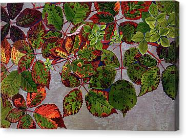 Rubus Fruticosus Canvas Print by Philippe Robert