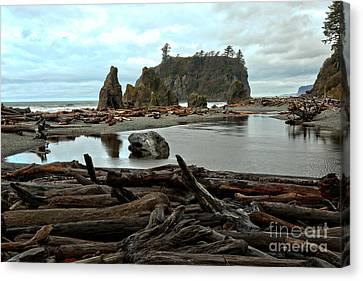 Ruby Beach Driftwood Canvas Print