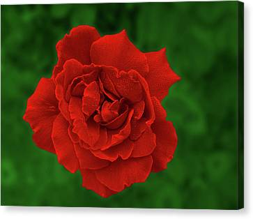 Canvas Print featuring the photograph Ruby by Mark Blauhoefer