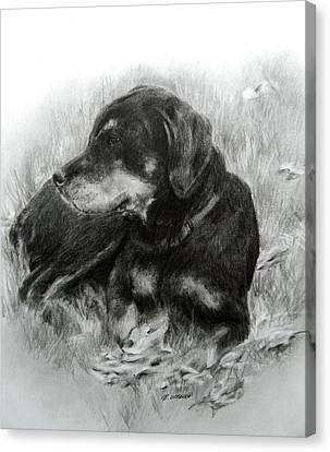 Canvas Print featuring the drawing Ruby by Meagan  Visser