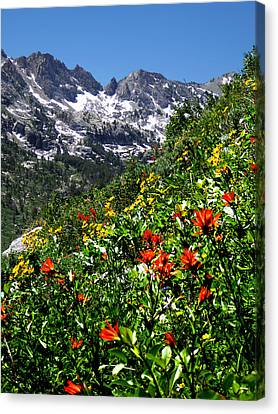 Ruby Mountain Wildflowers - Vertical Canvas Print by Alan Socolik